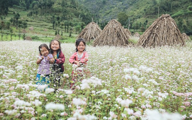 Mùa hoa tam giác mạch tại Mèo Vạc đẹp đến nao lòng